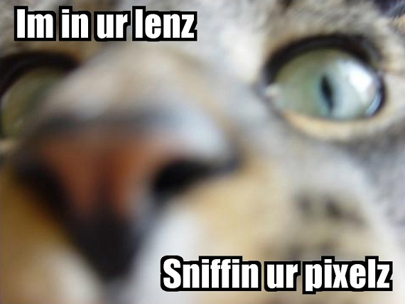 what-is-meme-content-lolcat