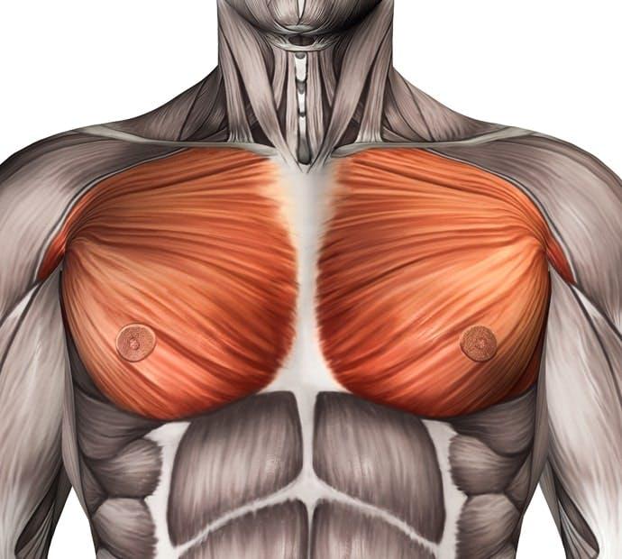 1日5分の筋トレで 「分厚い胸板」をつくろう! 【男のkintre!:大胸筋】