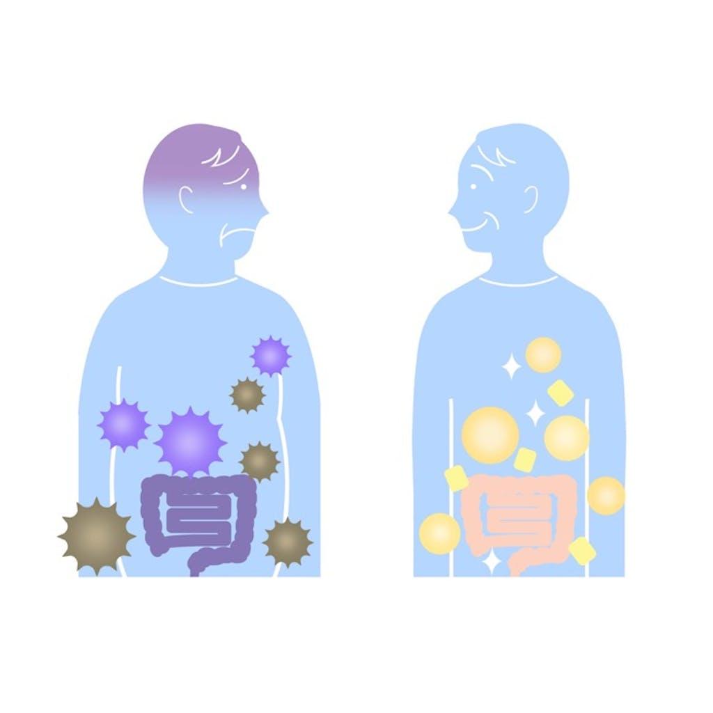 知れば肥満の予防に役立つかも!「腸内細菌と肥満の関係」