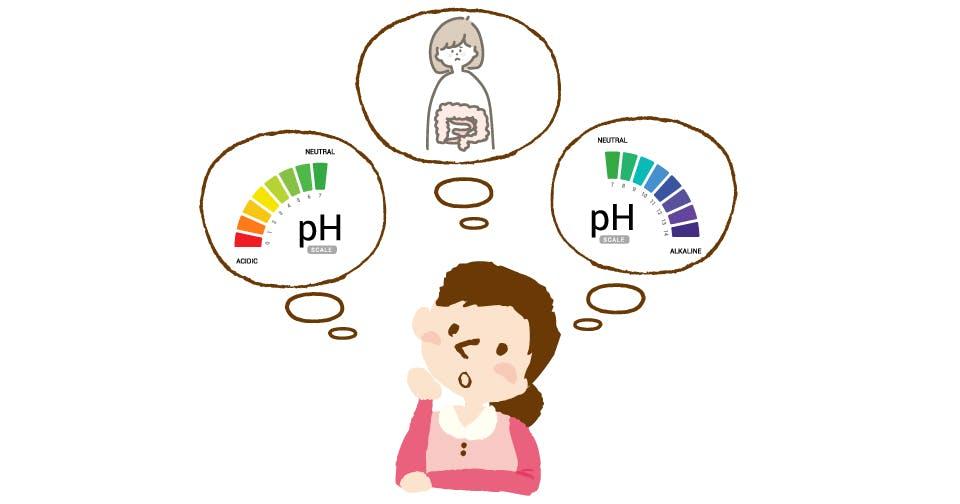 大腸内は酸性? 中性? アルカリ性?ビフィズス菌が大腸のpH値に与える影響とは?