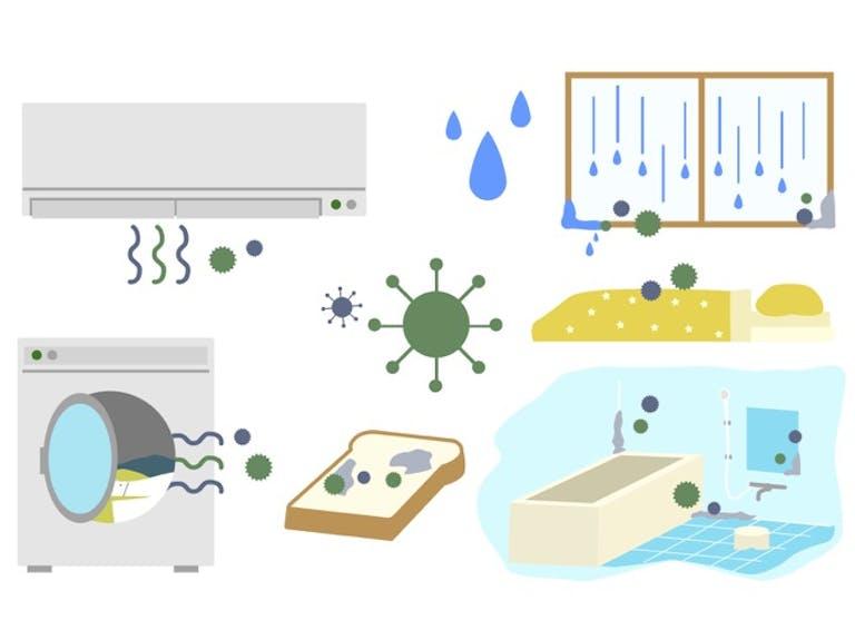 夏に発生しやすい室内のカビ。繁殖条件の1つを封じて、効果的に防ごう!